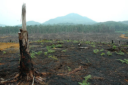 benefits of deforestation article